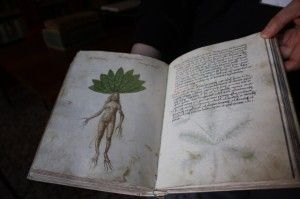 Biblioteca de L'Orto Botanico