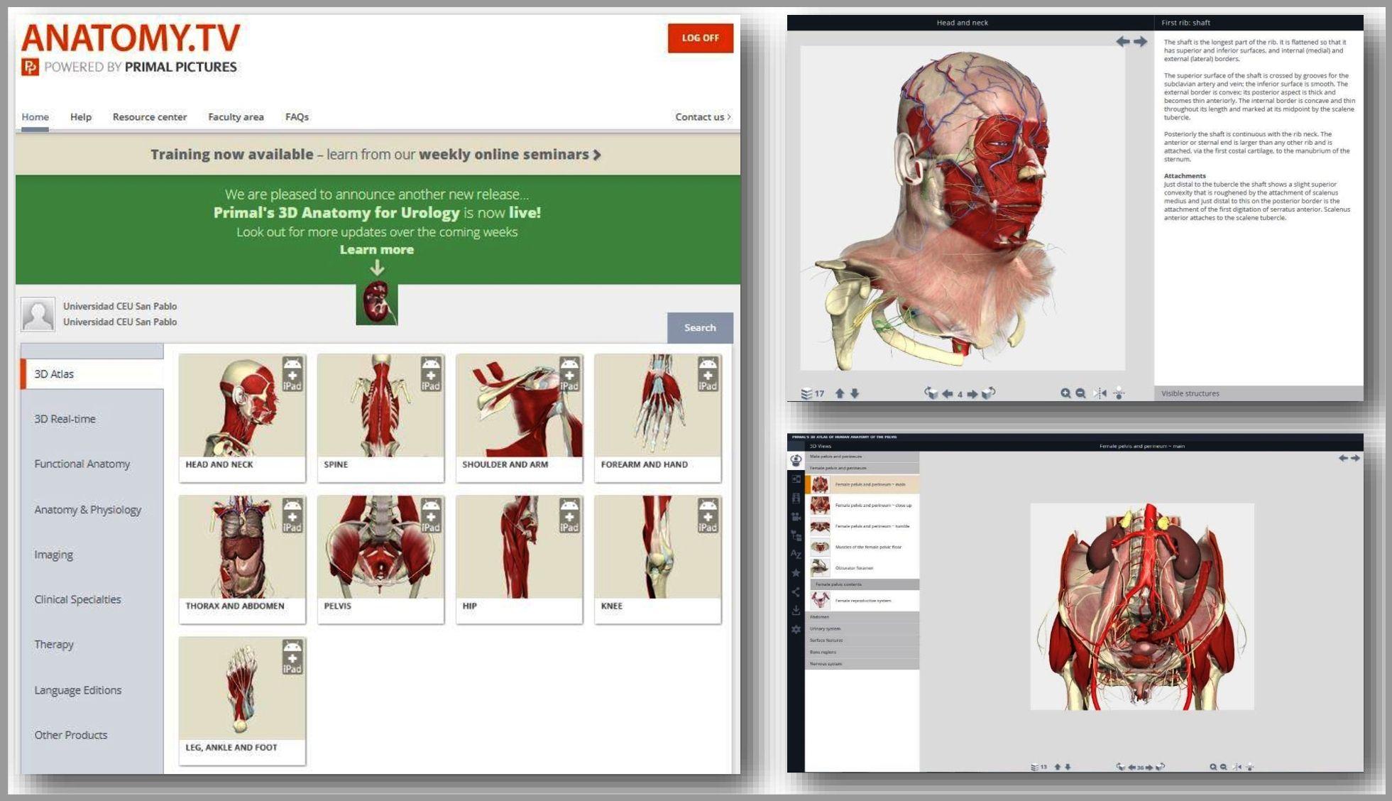 Primal\'s 3D Atlas: una herramienta imprescindible - Biblioteca CEU