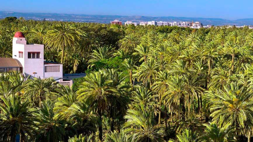 View of Elche