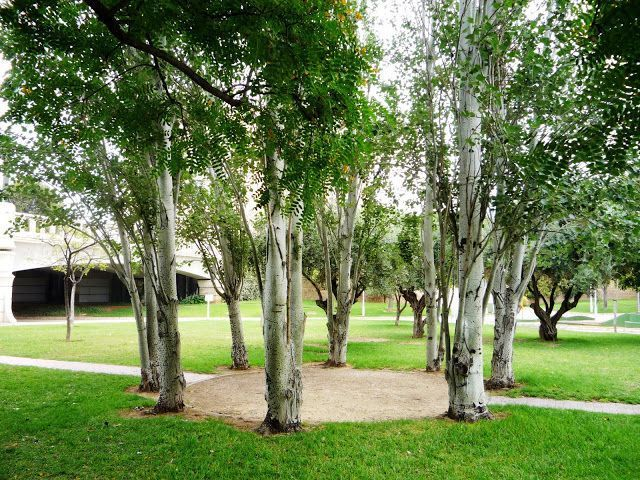 You can enjoy long and pleasant walks in the Gardens of the River Turia, now a big park