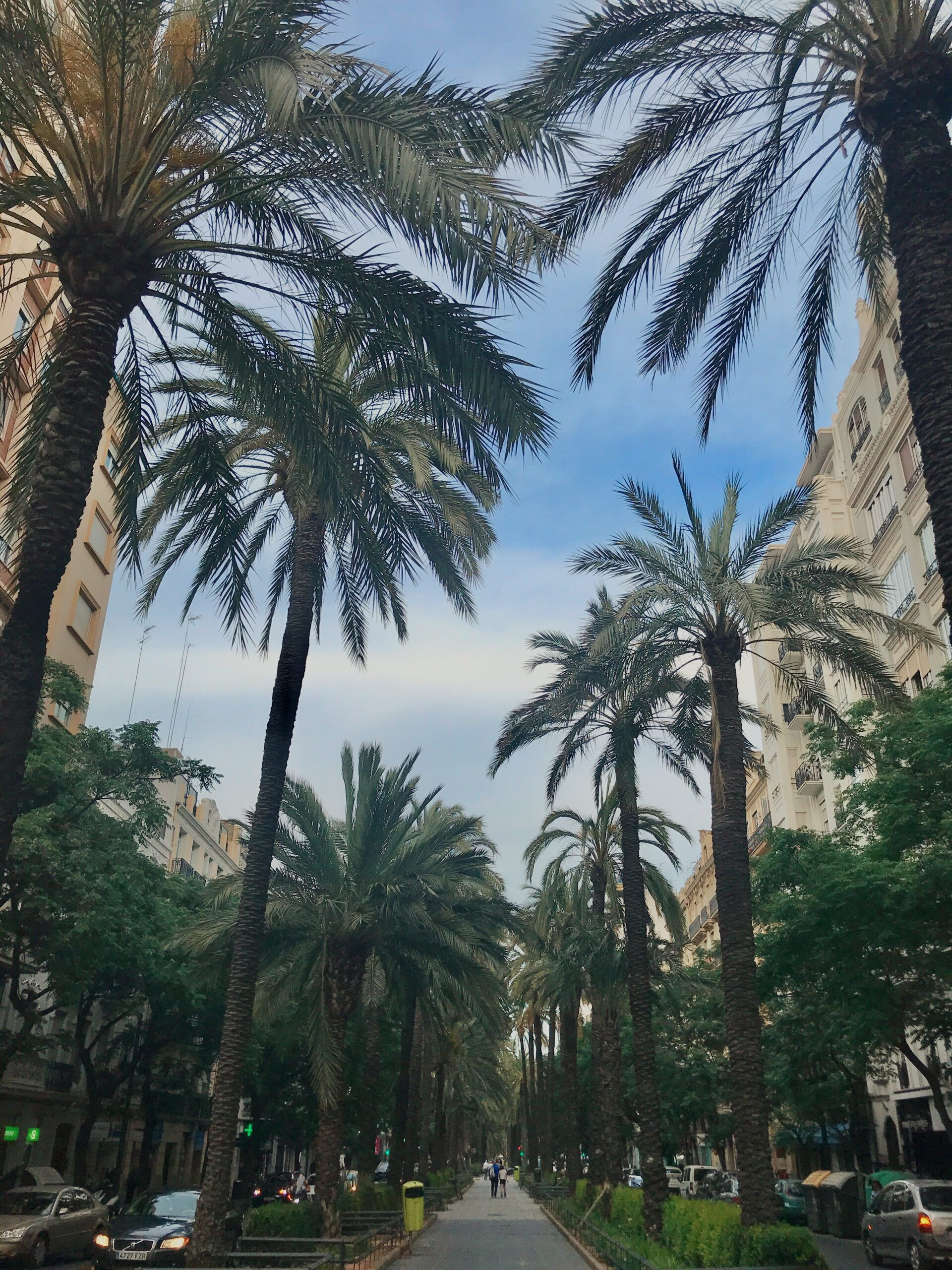 Tropical City Vibes in Valencia