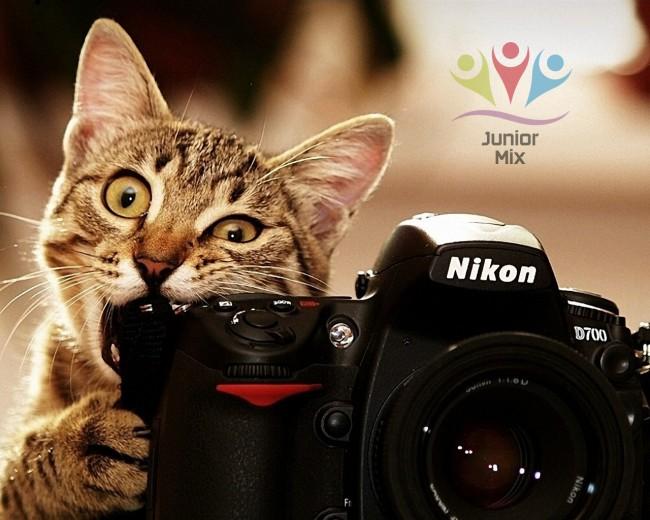 Cats-also-use-the-camera_12l80x1024 copia