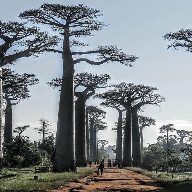 Madagascar, imagen de Andrea Nomdedeu