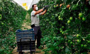 Agricultura a partir del COVID-19
