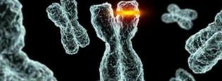 cromosoma foto_n