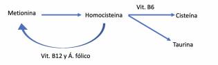 metabolismo de la metionina