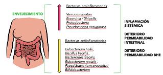 Variabilidad bacteriana en la microbiota de un paciente anciano