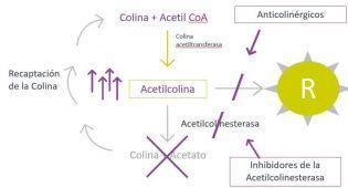 Interacción inhiobidores actetilcolinesterasa y anticolinérgicos