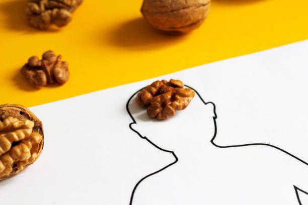 El cerebro presenta un aspecto similar al de una nuez.