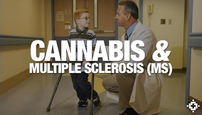 nuevos tratamientos esclerosis múltiple