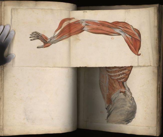 torso y brazo del Atlas de Miología hallado en París