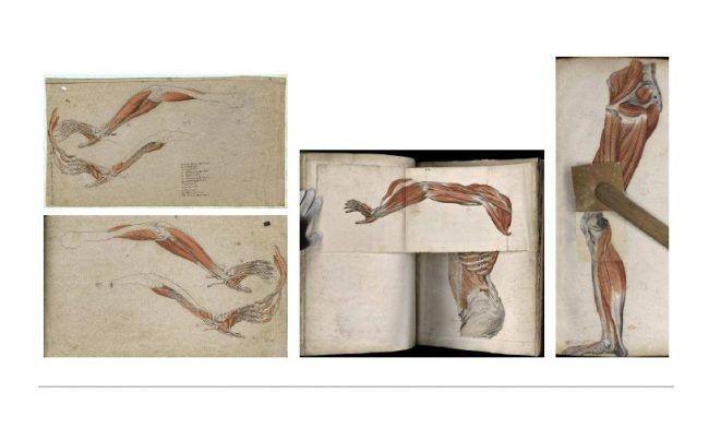 varias láminas del Atlas de Miología