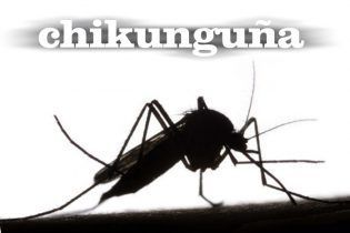 El mosquito tigre, transmisor del virus del dengue y Chikunguña, sigue proliferando en la Comunidad Valenciana