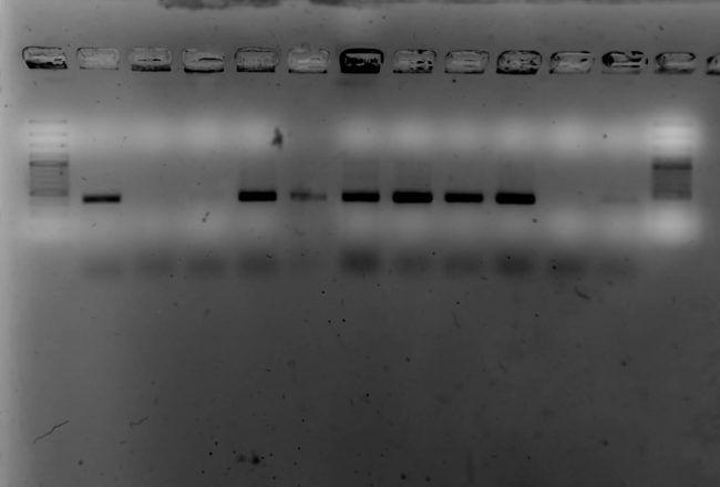 blog-ebola-deteccion-fluido-oral-3