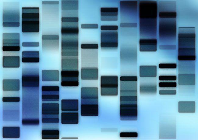 foto ADN