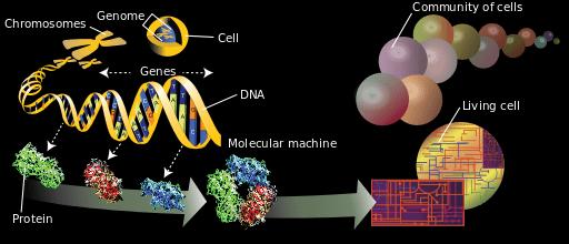 foto de genoma