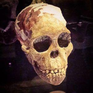 Cast of skull