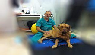 foto veterinaria
