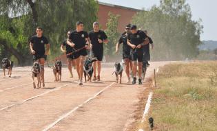 Aunque nos ayuden a detectar bombas, nuestros perros tienen que jugar y entrenarse para estar en plena forma! En la imagen, los perros de la Policía Militar del Batallón Jaime I de Valencia, entrenando con sus mejores compañeros: sus guías!