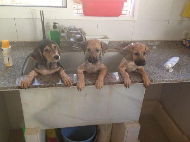 Nos dimos cuenta de que había otros perros que nos necesitaban