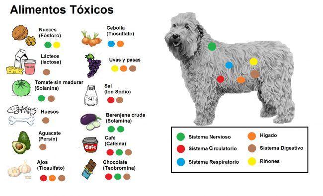 alimentos tóxicos dibujo