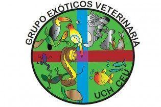 simbolo exotics