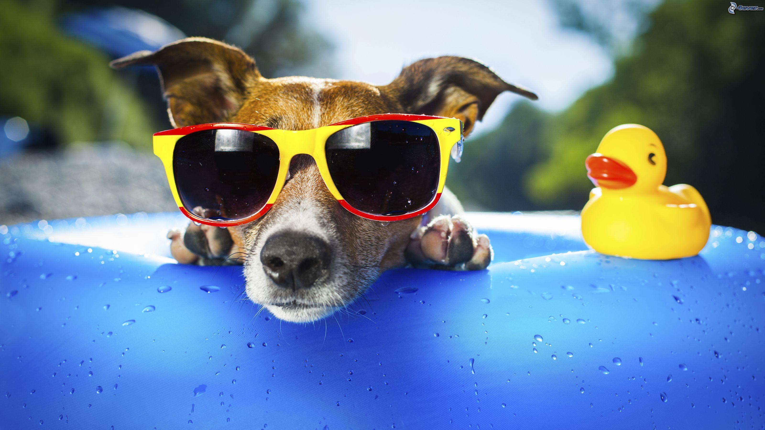 perro gafas sol