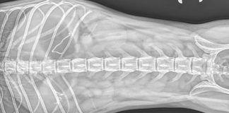 Radiografía abdominal de Meliade