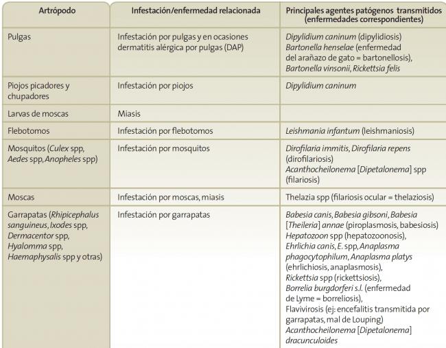 Principales patógenos transmitidos por garrapatas