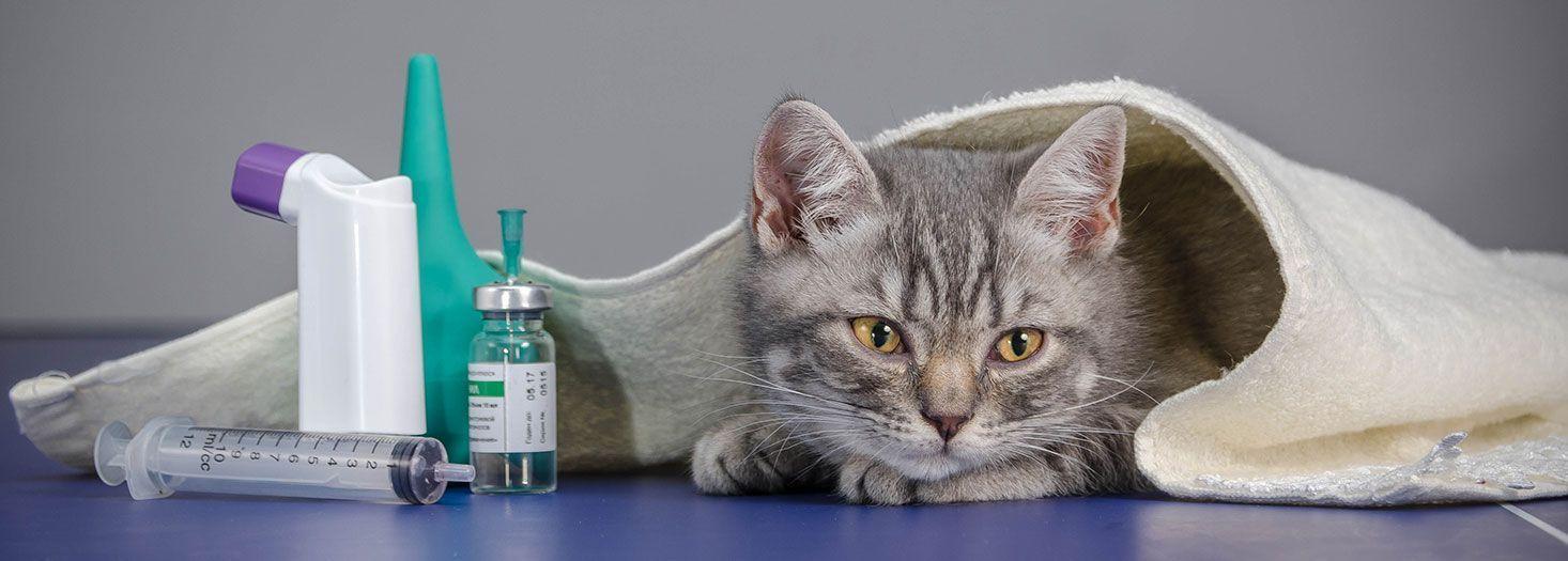 ¿Gestionas correctamente los medicamentos?