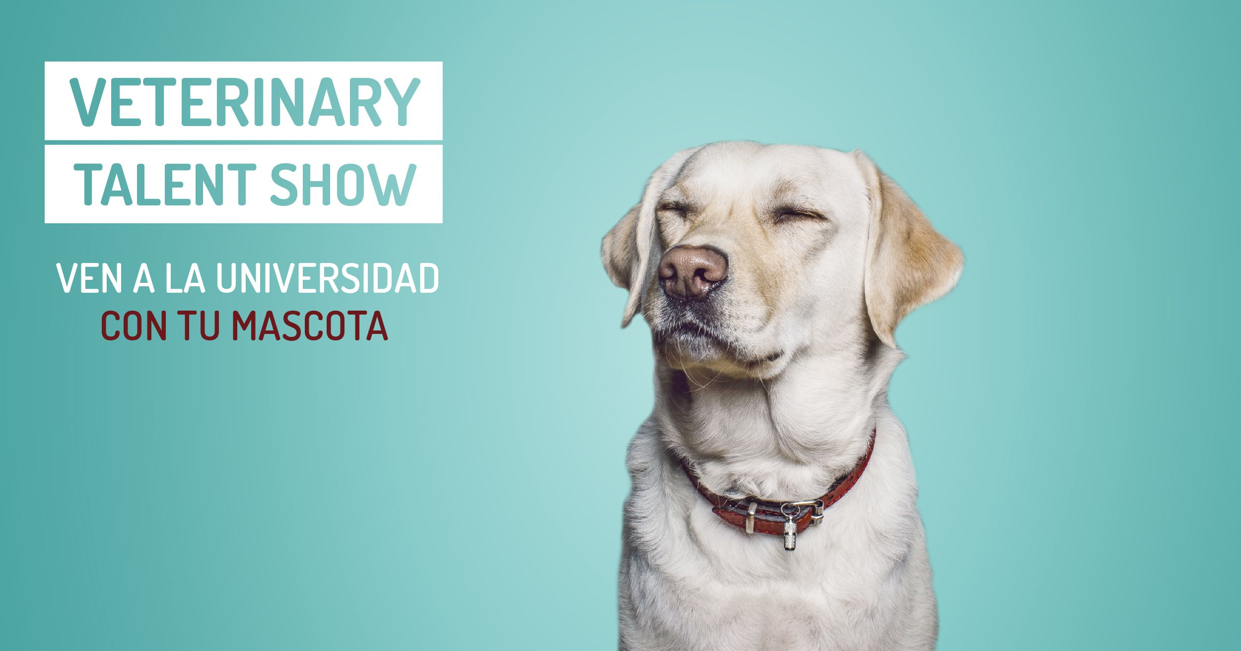 Cartel del Veterinary talent show