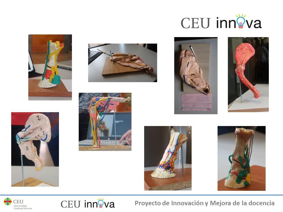 Presentación del Proyecto Innova de Anatomía Veterinaria - Blog de ...