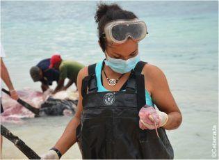 Playa. Una investigación apasionante en Madagascar