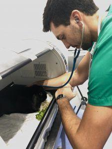 Veterinario interno revisando en hospitalización a un conejo.