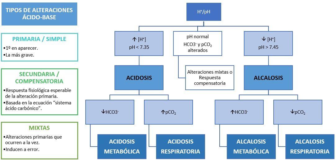 Algoritmo diagnóstico Alcalosis metabólica. Elaborado por Diana Uribelarrea