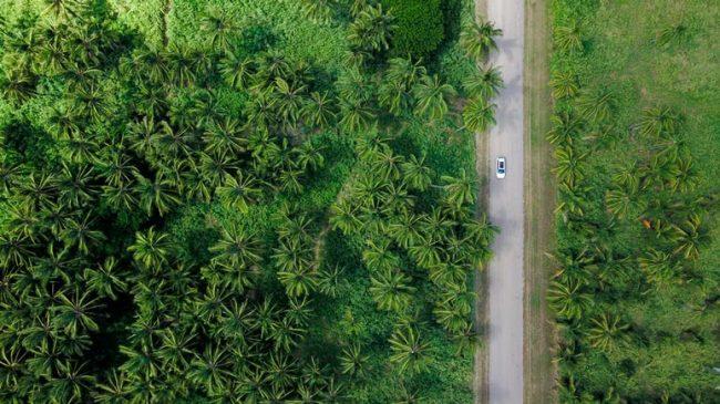 Image aérienne d'une fôret